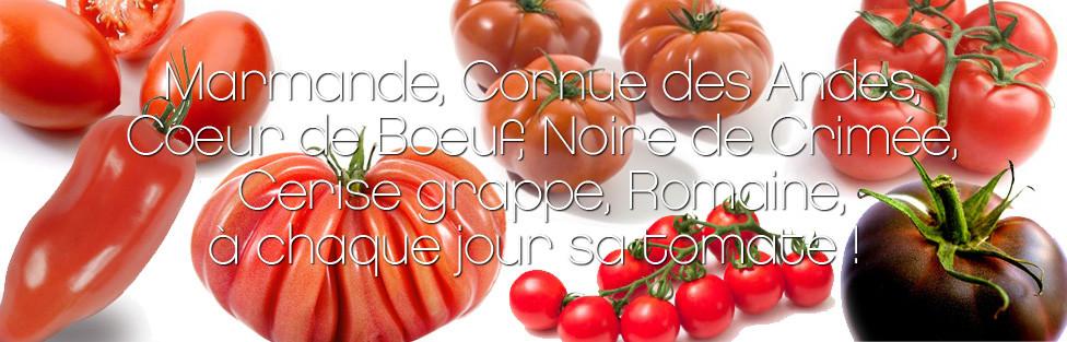 La tomate…