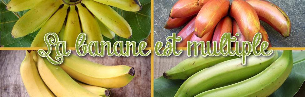 La banane est multiple